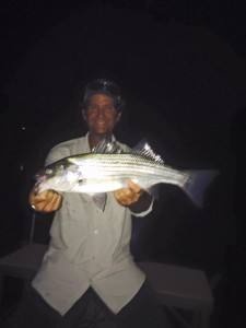 Stripers 2015 3