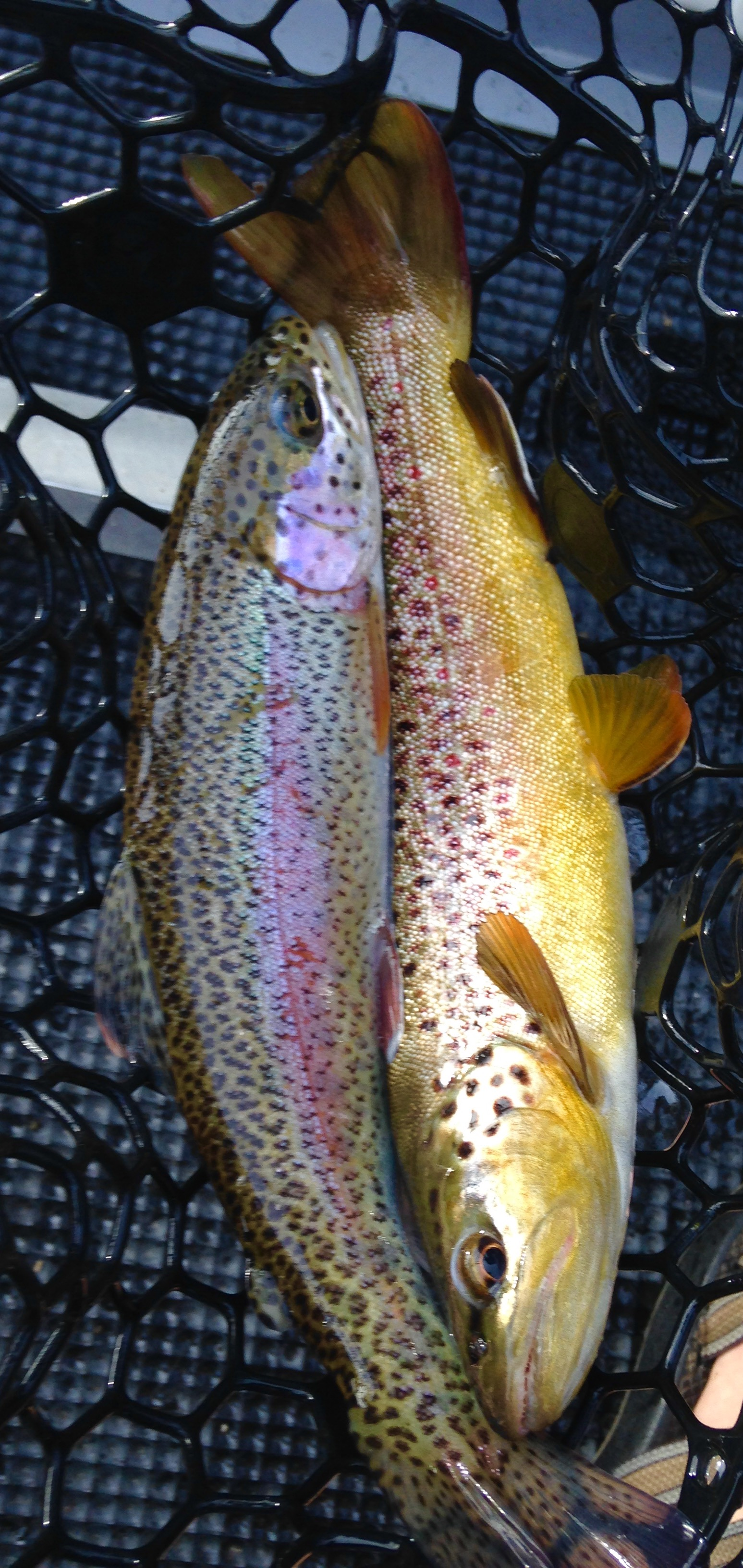 Doubles on the South Holston River with Huck