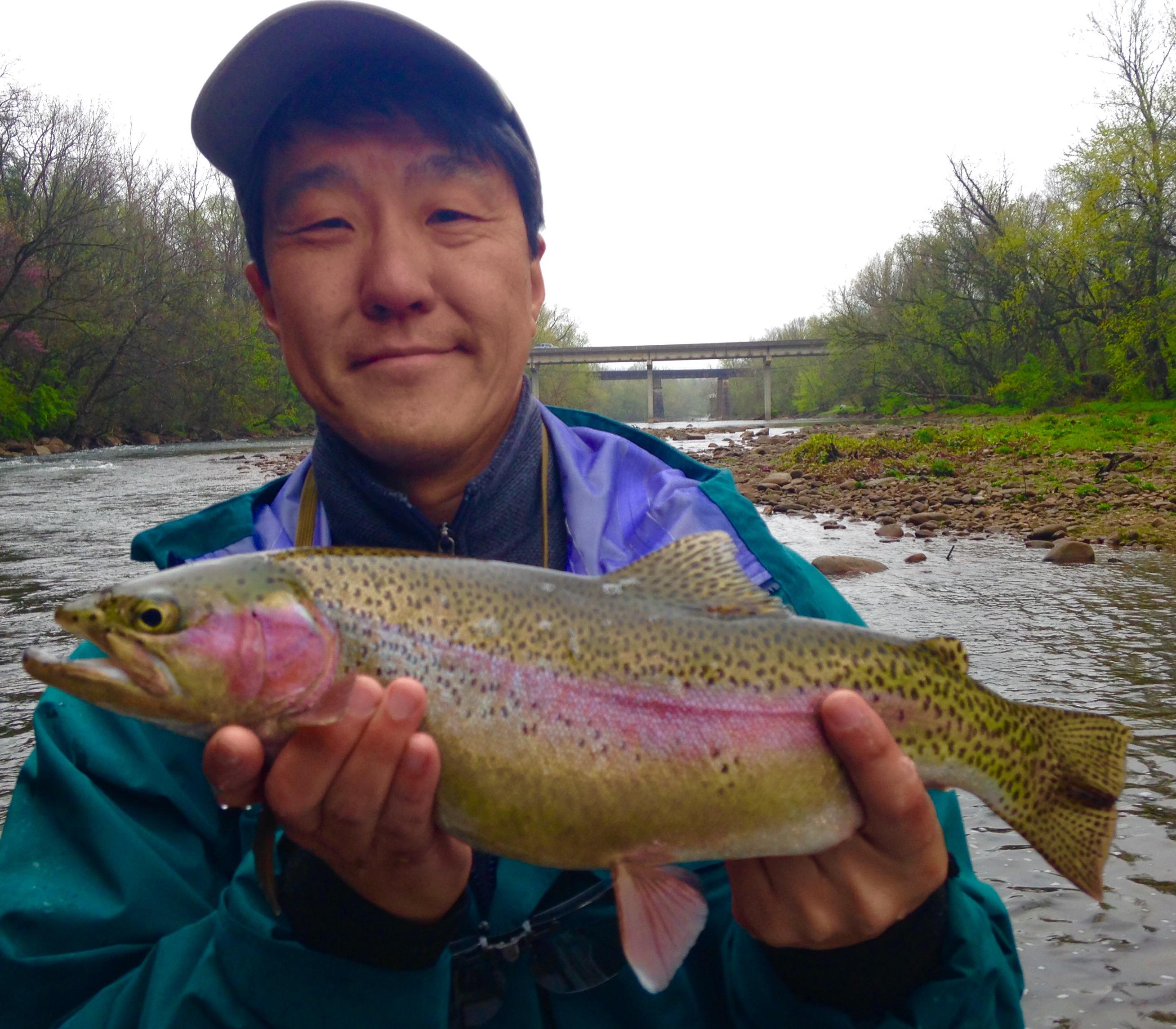 Fat Watauga river rainbow on a caddis