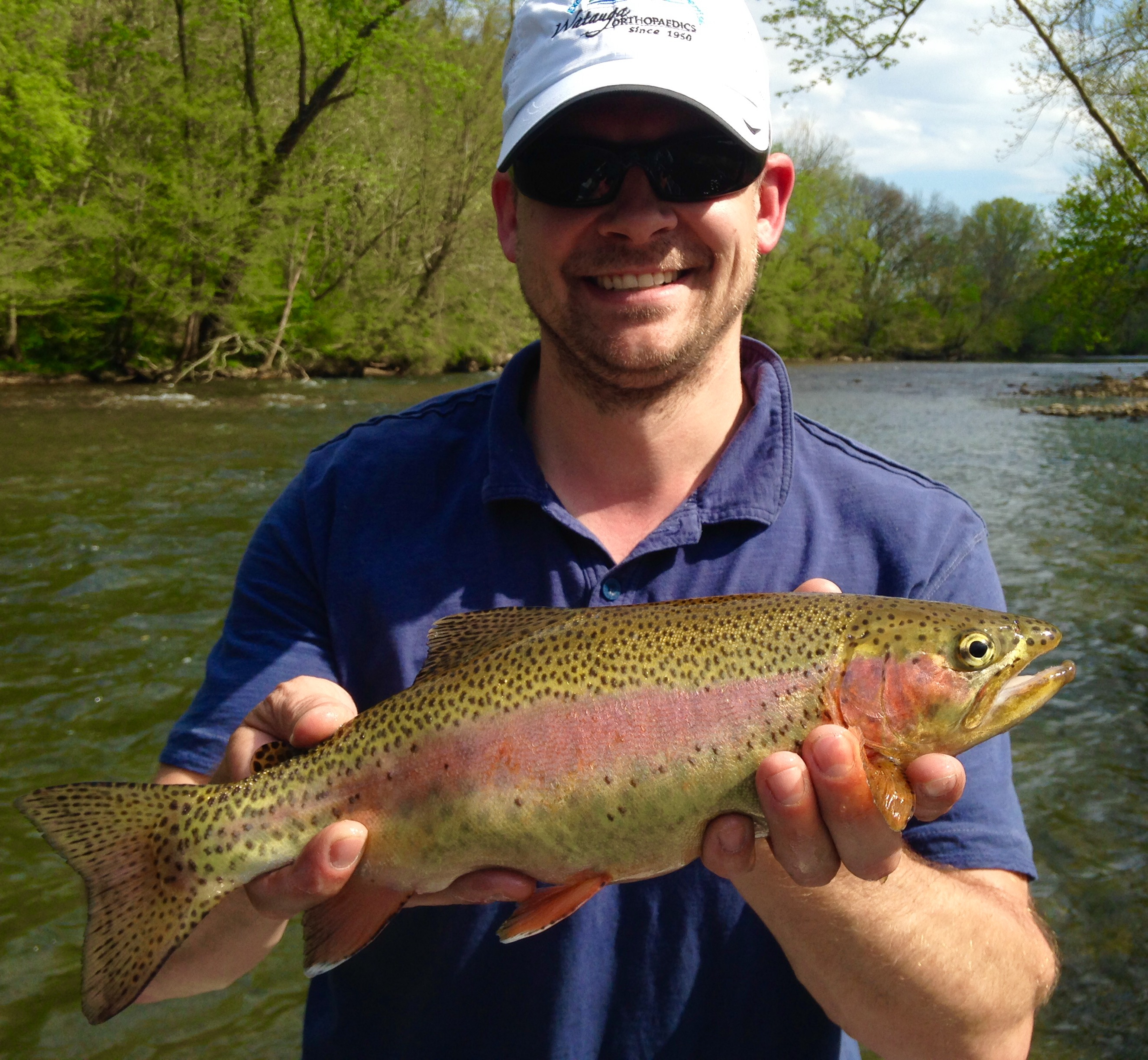 Football shaped Watauga river rainbow trout caught on a caddis