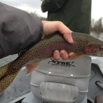 Huck Watauga river rainbow trout white beef curtain
