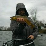 Huck watauga river brown trout white beef curtain