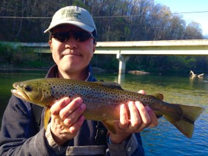 Watauga river brown on a caddis