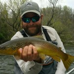 Watauga river brown on a caddis.