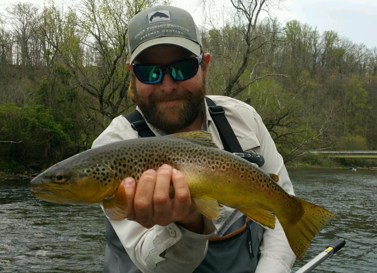 Watauga river brown on a caddis.
