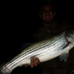 South Holston river striper