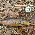 South Holston river 24 inch Brown Jan 2013.