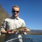 Watauga rainbow trout