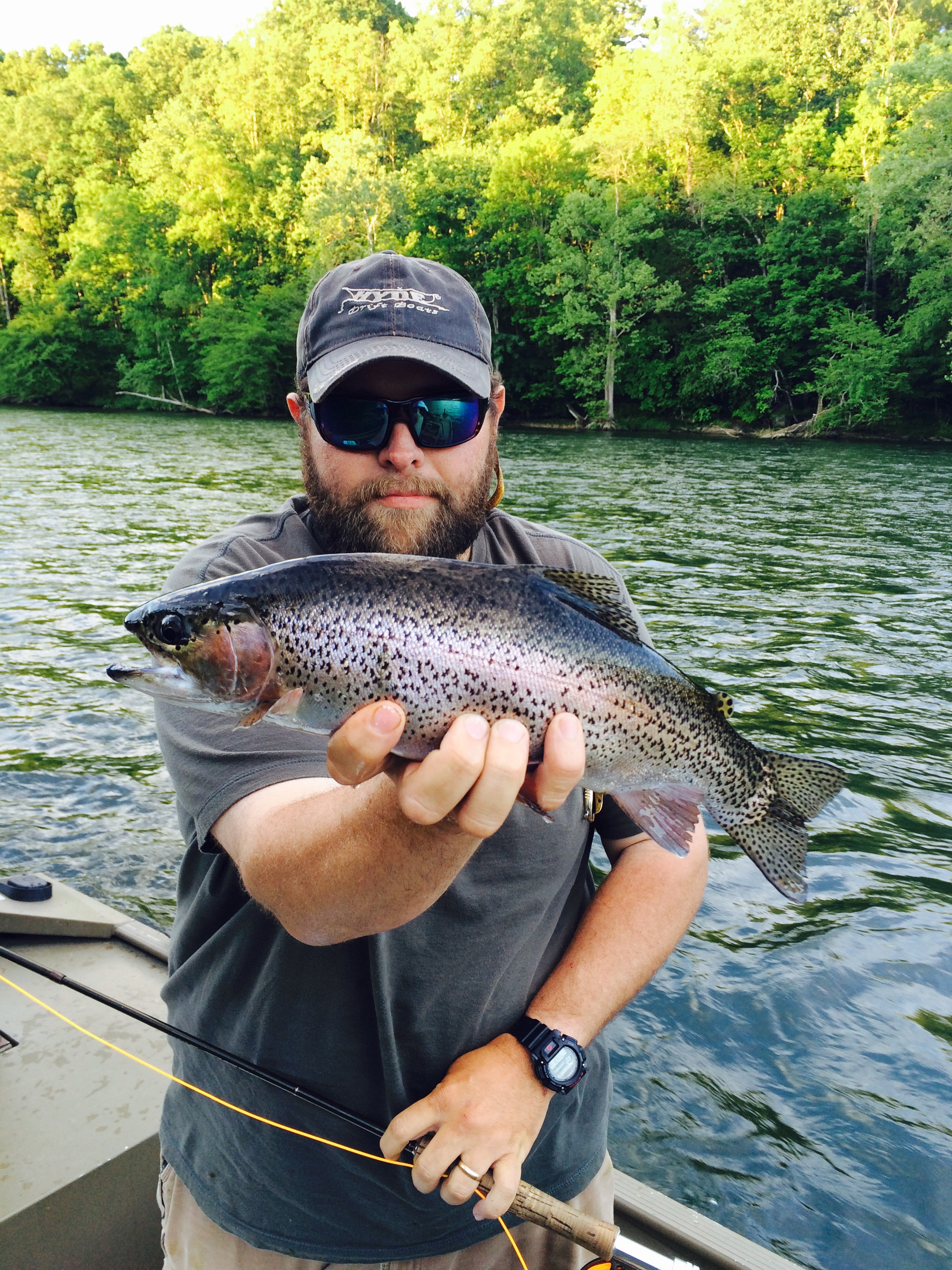 South Holston River Rainbow Trout Easternflyoutfitters