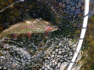 Healthy Watauga rainbow