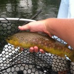 watauga river brown